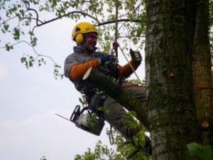 Grimpe arbres élagage (1)