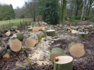 Grimpe arbres élagage (11)
