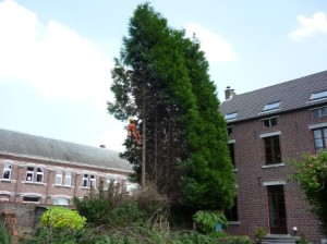 Grimpe arbres élagage (12)