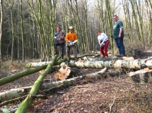 Grimpe arbres élagage (2)