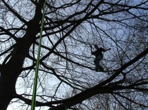 Grimpe arbres élagage (3)