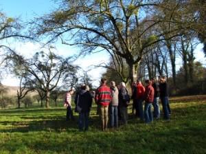 Grimpe arbres élagage (8)